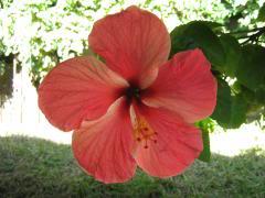flower_240w180h.jpg